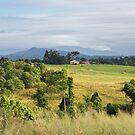 Campagna Farm - Far North Queensland by Frank Moroni