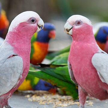 Pink Galahs by moronif