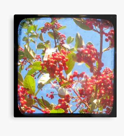 Berry Red Metal Print