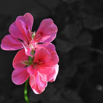 Lonely Flower (孤独) by Kiukai-Furutsu