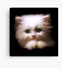 Cat Bed & Throw Pillows Canvas Print