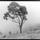 Nkandla fog by eleniphotos67