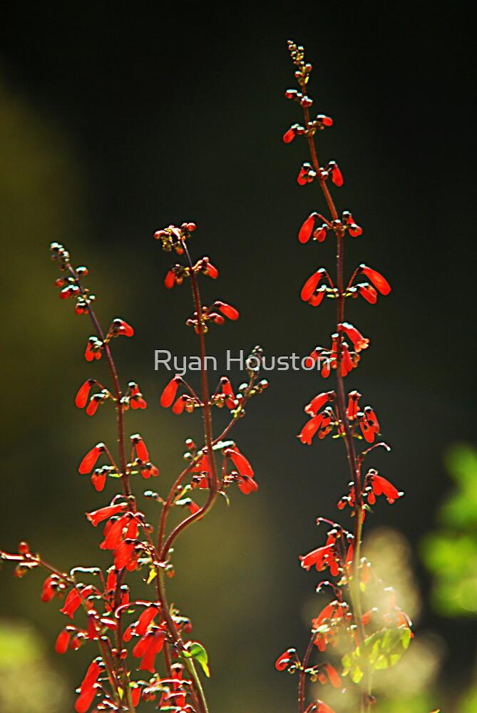 Backlit Wildflowers by Ryan Houston