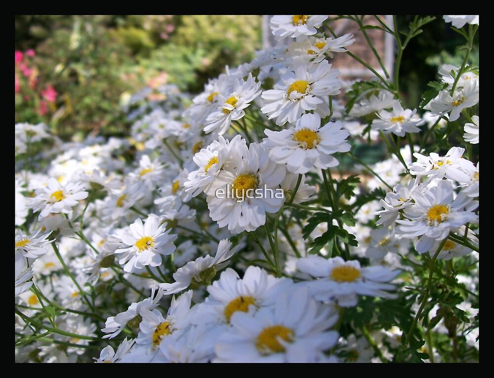 Garden by eliycsha