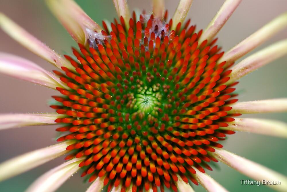 Inside a flower by Tiffany Brown