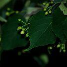 Dark Green Velvet by Pamela Hubbard