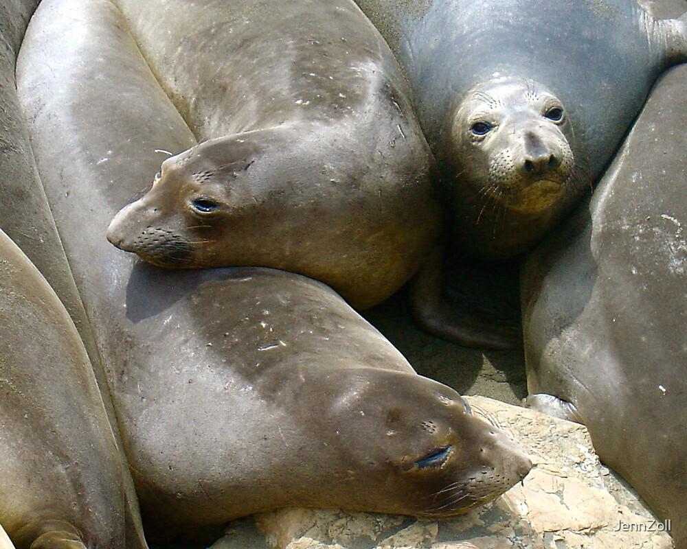 elephant seals galore by JennZoll