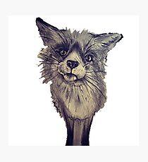 Fox cute animal wildlife nature Photographic Print