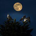 Ospreys with the moon by Zina Stromberg