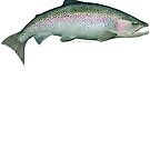 Rainbow Trout by David Pearce