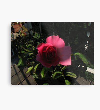 My Rose Metal Print