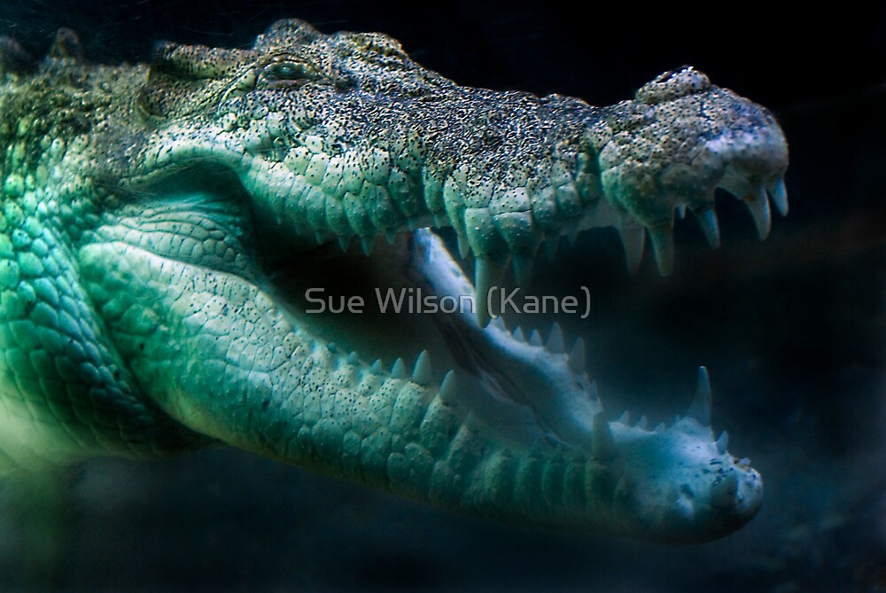 Smile! by Sue Wilson (Kane)