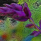 Salvia - Coloured Pencil Effect by Jennifer Sumpton
