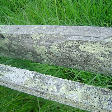 Fence post by zoejones143