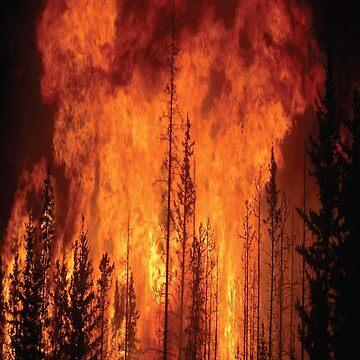 Waldbrand von JudgeNaught