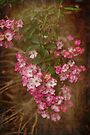 Pink Rose Cascade by Elaine Teague
