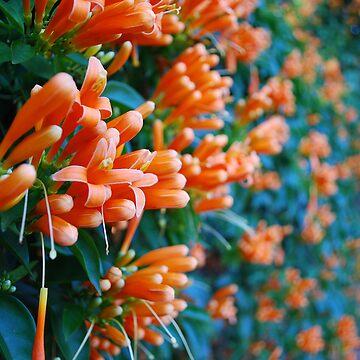 orange bliss - extended by frankierose