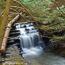 Salt Springs Waterfalls by BigD