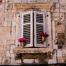 Window Flowers by Rae Tucker