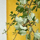 Blackberry Leaves by Christine  Wilson
