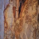The Tree Bark Collection # 24 - The Magic Tree by Philip Johnson