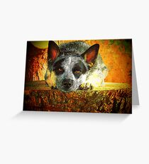 Pensive Cattle Dog Greeting Card