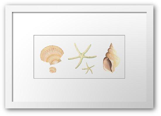 Scallop, starfish and whelk sea shells study by LisaLeQuelenec