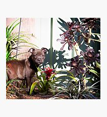 Indi In The Jungle Photographic Print