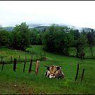 Highlander in an Emerald Field by Wayne King