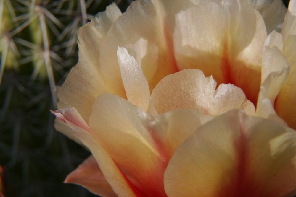 Cactus blossom by MPDurbin