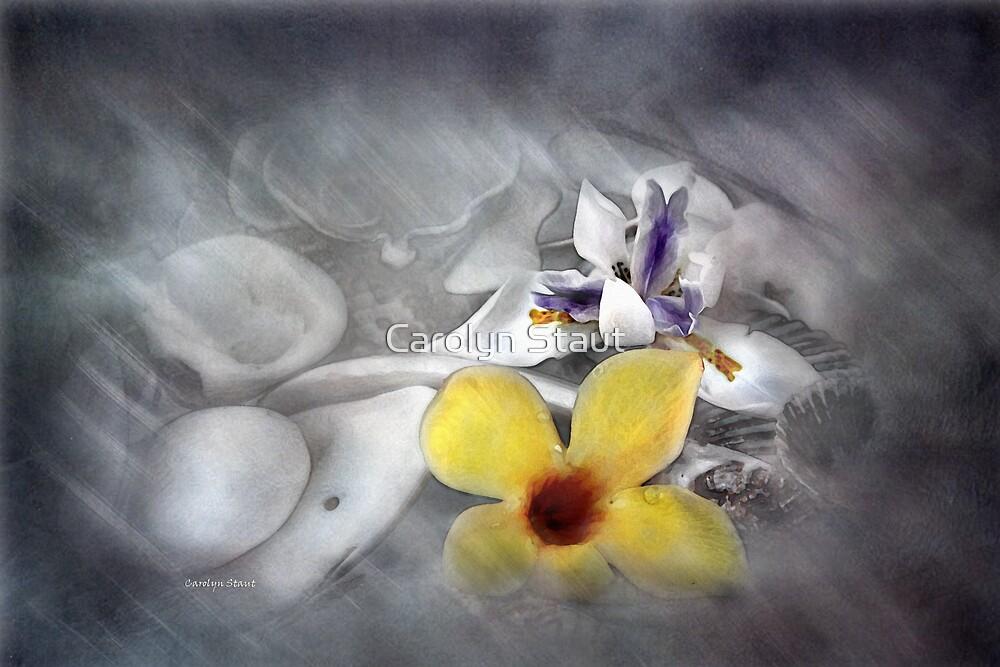 Petals by Carolyn Staut