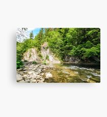 rapid flow of the river in forest Canvas Print