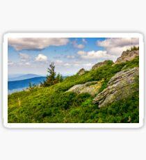 spruce tree on a mountain hill side Sticker