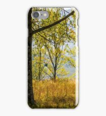 autumn forest in yellow foliage iPhone Case/Skin