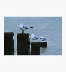 Birds Photographic Print
