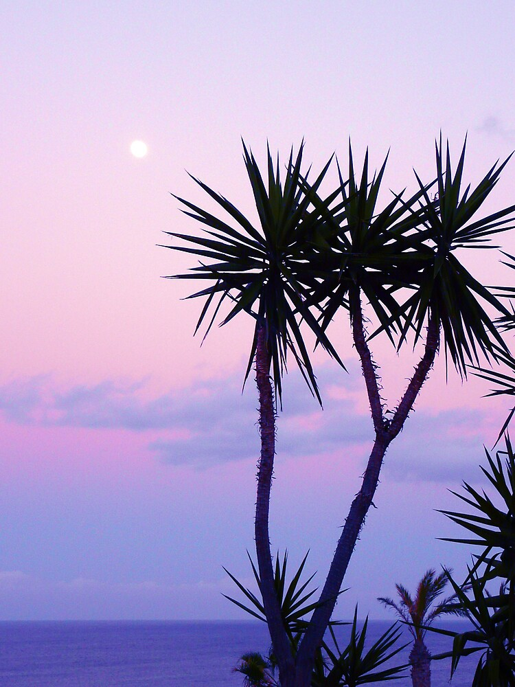 Night sky palm by Yeksel
