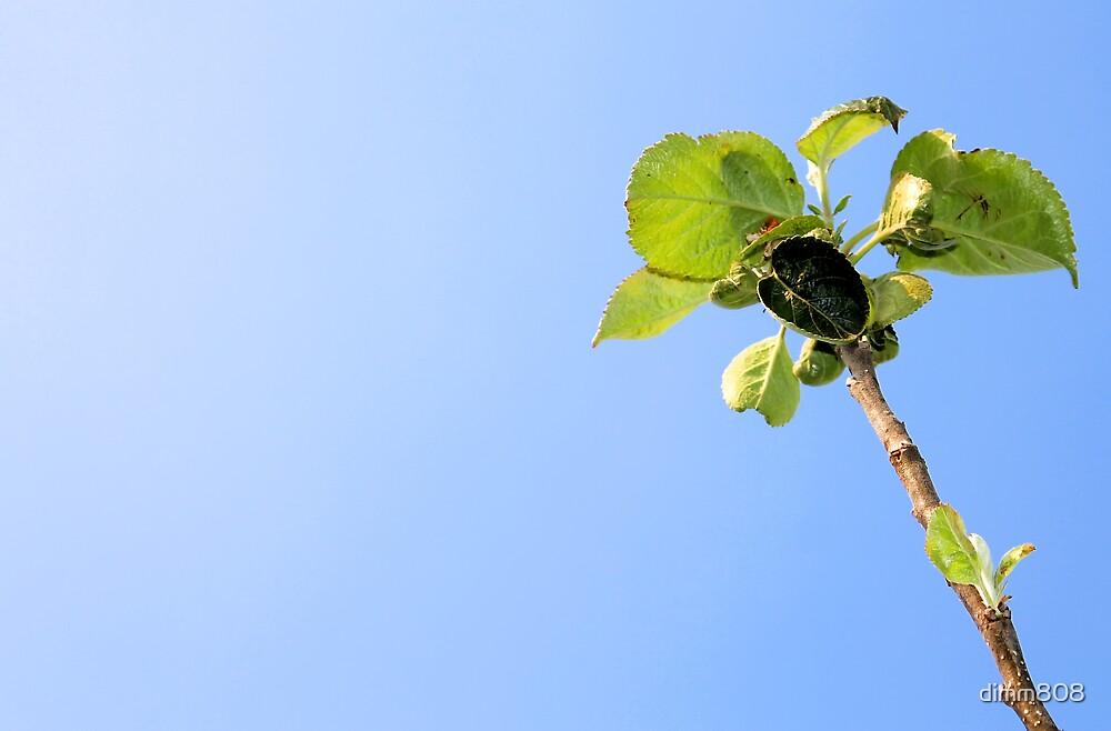 apple, garden, green nature by dimm808