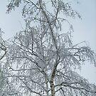 January  magic by Ana Belaj