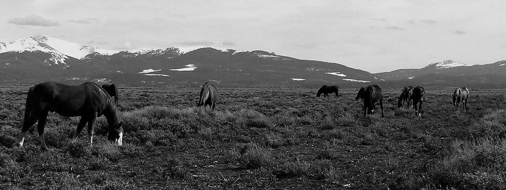 ~ Colorado Horses ~ by Brion Marcum