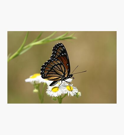 Butterfly and Blooms.. Photographic Print
