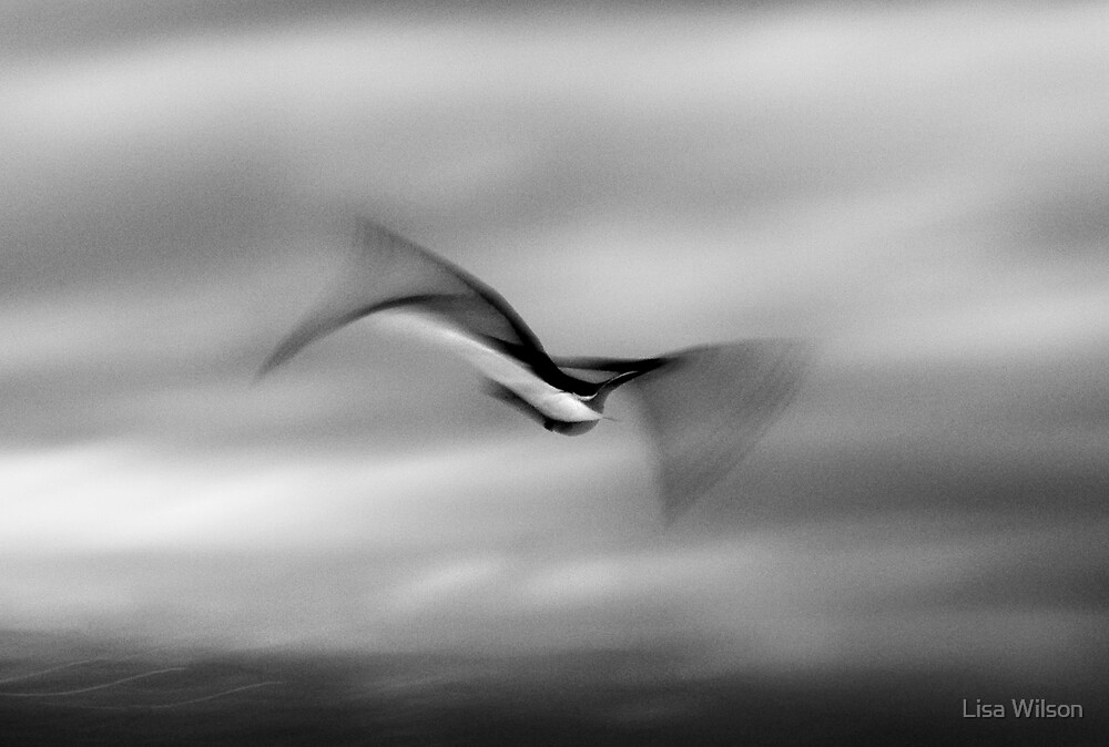 'in motion' by Lisa Wilson