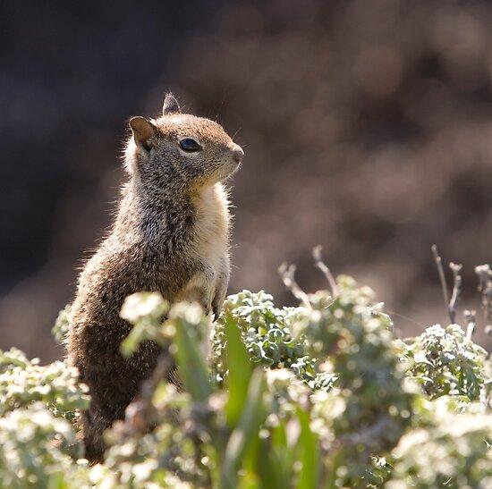 Ground Squirrel with Wild Flowers by Buckwhite