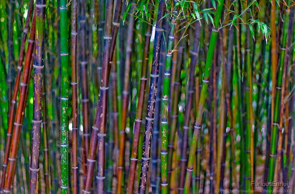 Bamboo I by FuriousEnnui