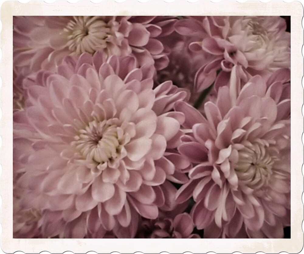 Vintage Flowers by ccribbs