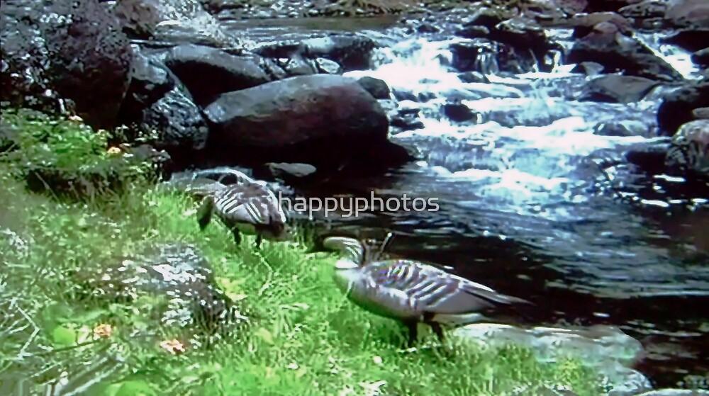 Birds in paradise by happyphotos