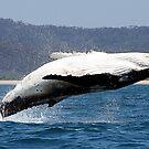 Humpback Whale breach by Raphaela  Sampaio