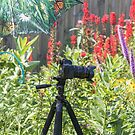 Photographing In My Garden by Thomas Young