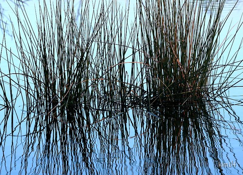 Reeds by kim14
