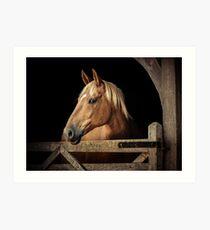 Suffolk Punch Horse Art Print