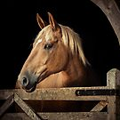 Suffolk Punch Horse by Patricia Jacobs DPAGB BPE4